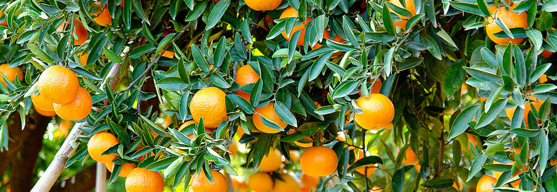 Cabecera preguntas frecuentes naranjas online